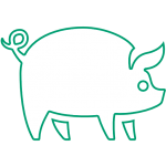 porcino_blanco